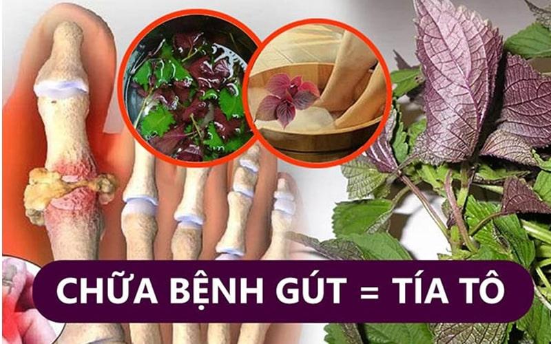 Cách chữa bệnh gout từ lá tía tô cực hay