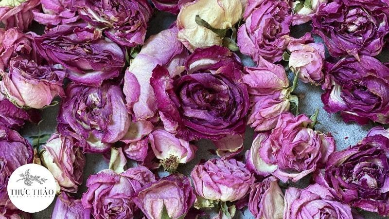 Cận cánh trà hoa hồng tại Thực Thảo