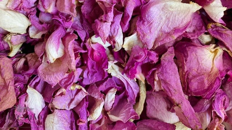 Trà hoa hồng loại 1 với cánh màu hồng tại Thực Thảo