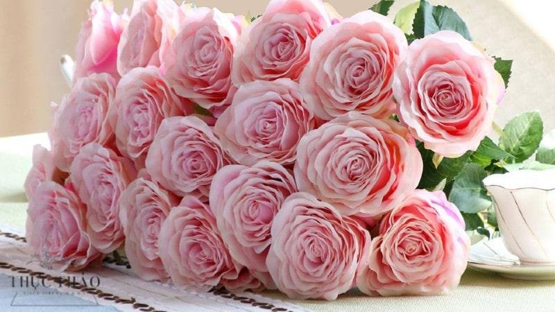 Hoa hồng là loài hoa được phái nữ yêu thích và là biểu tượng của sắc đẹp