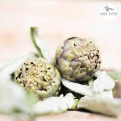 Trà hoa atiso mát gan, giải độc, tốt cho sức khỏe