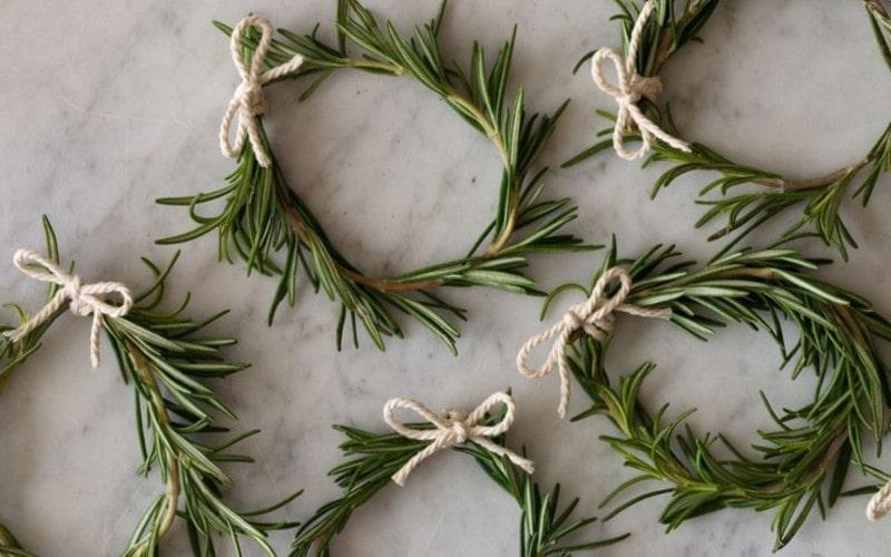 Công dụng của hương thảo đối với sức khỏe