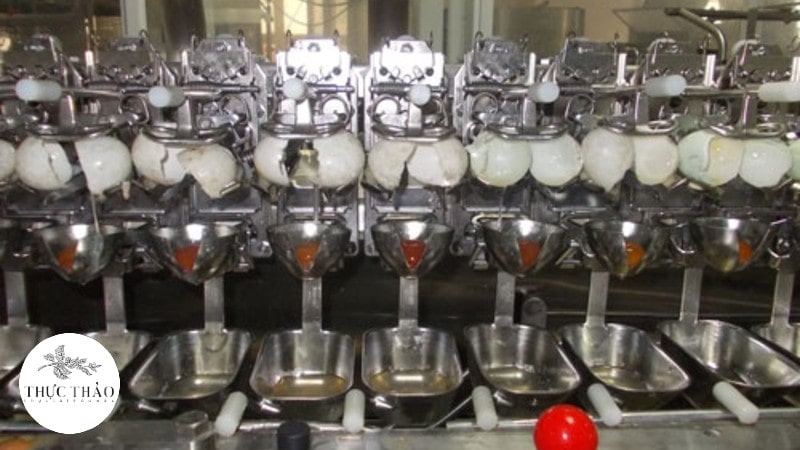 Mãy tách vỏ trứng theo công nghệ hiện đại, quy trình nghiêm ngặt